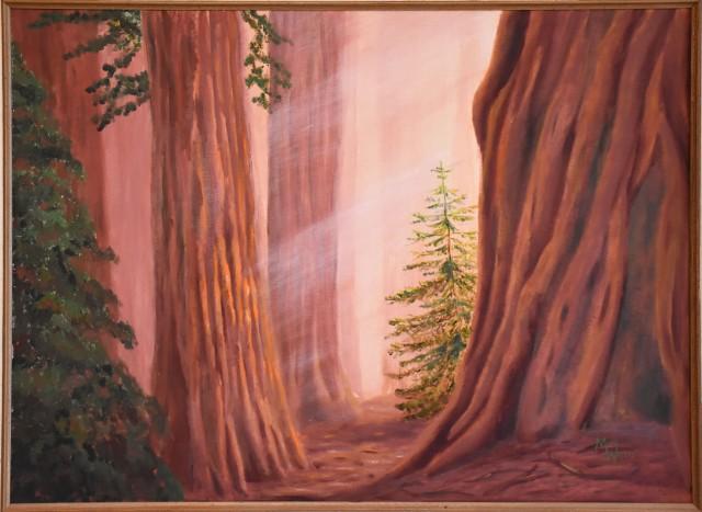 redwoods_1491_web